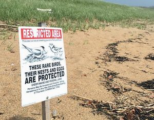 SIGNS LIKE THE ONE above denote piping plover nesting grounds at Reid State Park in Georgetown. The birds return each spring to make their nests in the grassy areas near the dunes on the beach.