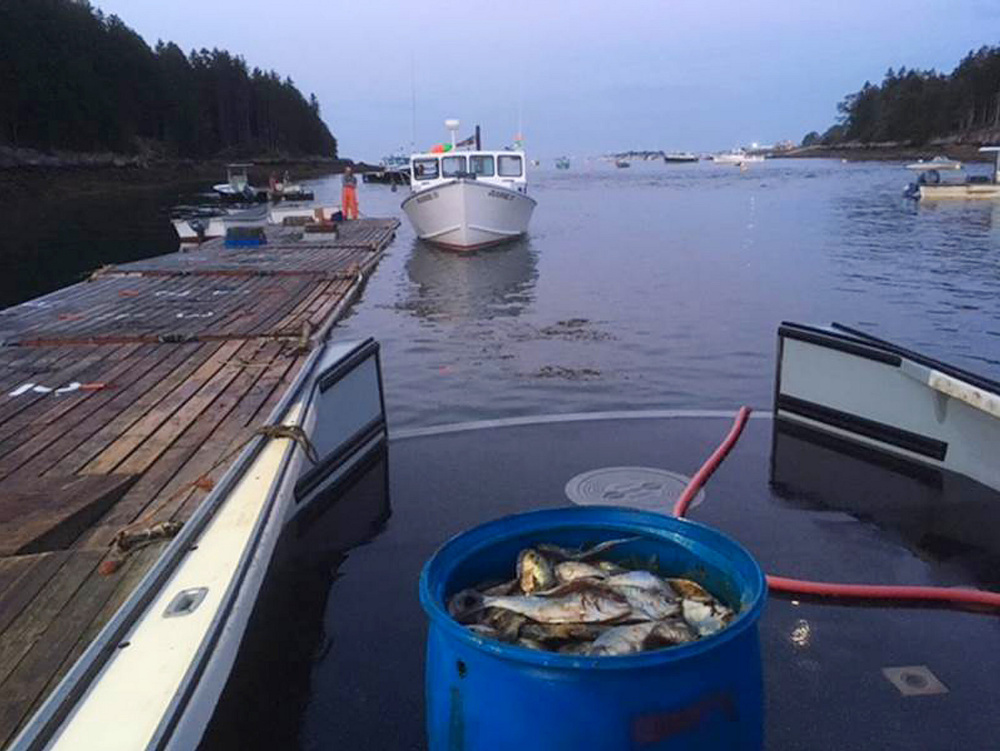 Someone's going to have to fill the lobster traps with those fish, and it'll be Kenneth Chutchian, below, who has that humble duty – and more – aboard the Island Lady.