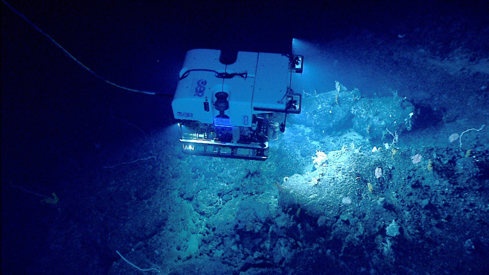 The National Oceanic and Atmospheric Administration's remotely operated vehicle Deep Discoverer investigates a deep-sea coral habitat on Retriever Seamount, part of the Northeast Canyons and Seamounts Marine National Monument, designated by President Barack Obama on Sept. 21, 2016. It's the only permanently protected reserve in federal Atlantic waters.