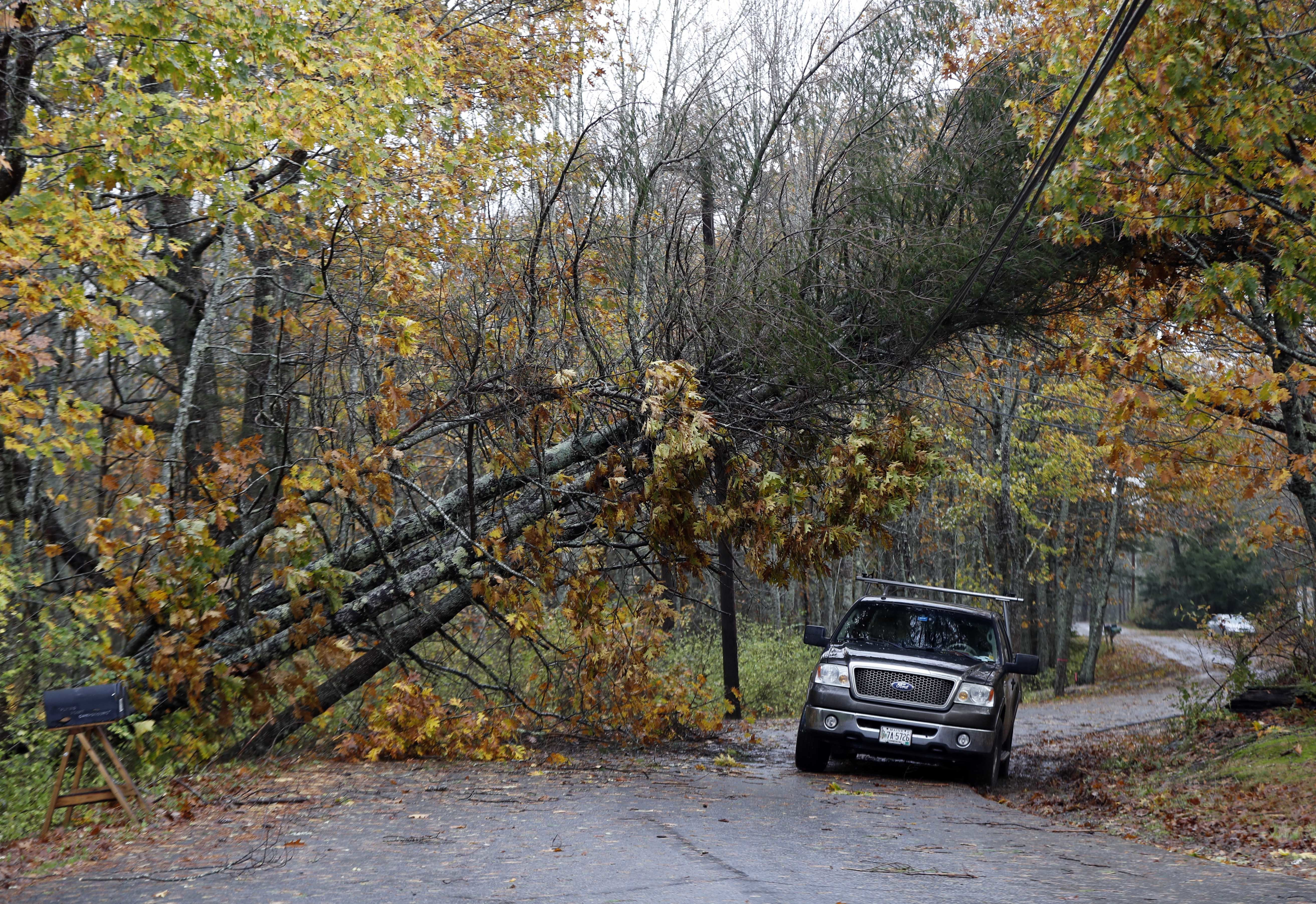 A motorist drives under downed pine trees that are resting on power lines in Freeport on Monday. A strong wind storm has caused widespread power outages. AP WIREPHOTO
