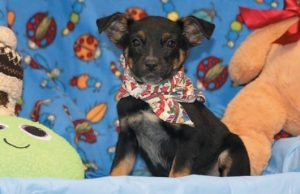 DIVA is available for adoption through the Coastal Humane Society.