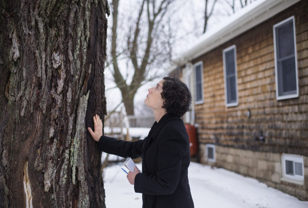 """Source editor Peggy Grodinsky prepares to part with the red maple tree in her Portland yard before it was cut down Jan. 12. A reader says Grodinsky's touching story made her realize a need to refocus on things """"found in the interstices"""" of everyday concerns."""