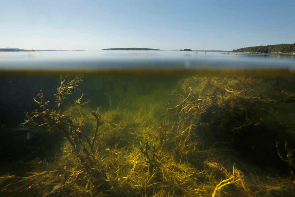 Maine-based researchers concur with findings by their colleagues in Nova Scotia that the Gulf of Maine, as seen in East Blue Hill in 2015, has been filling with unusually warm water in recent months.