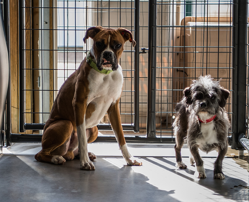 f0056509 Well-funded dog rescuers buy animals from the breeders they scorn -  Portland Press Herald
