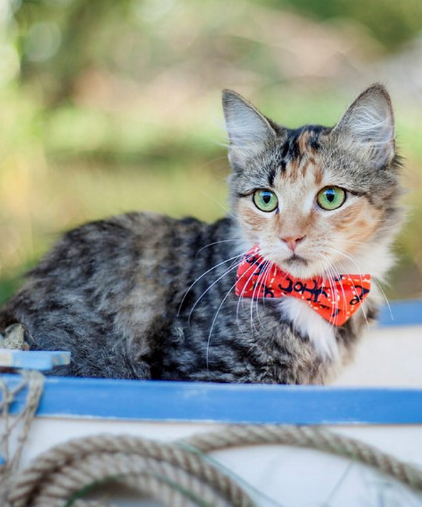 Laura Decato's pet bow ties cost $7-10 depending on the size.