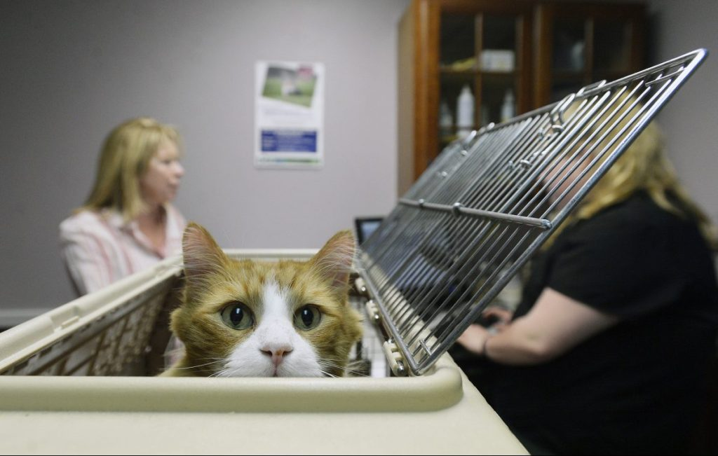 Maine's becoming a hub for the animal health industry - and