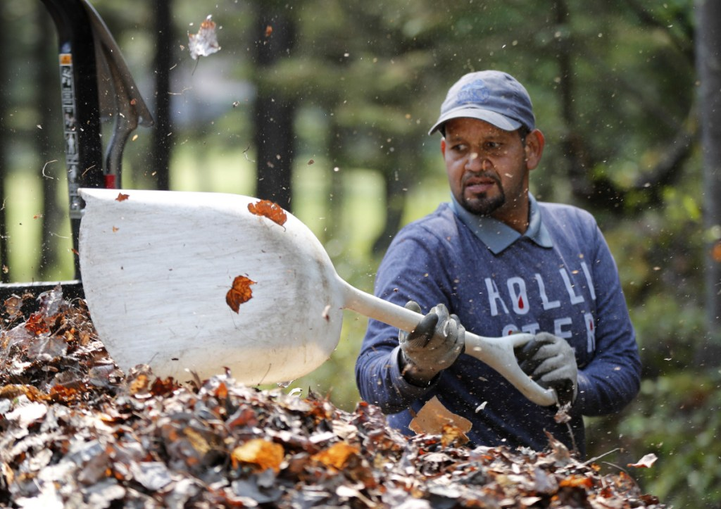 Angel Gonzalez shovels leaves into a trailer at Sebasco Harbor Resort in Phippsburg. Gonzalez is one of several Puerto Rican workers hired by the resort to do landscaping, housekeeping and kitchen work for the summer season.