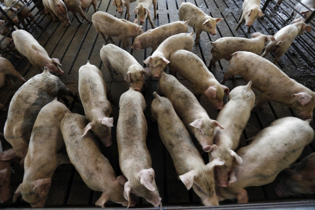 Hogs owned by Smithfield Foods mill about at a Farmville, N.C., farm. Many lawsuits seek to force Smithfield to modify its methods to curb smells, noise, and flies.