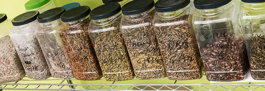 Containers of processed crickets on a shelf are ready for packaging at Entosense LLC's new offices in Lewiston's Hill Mill.
