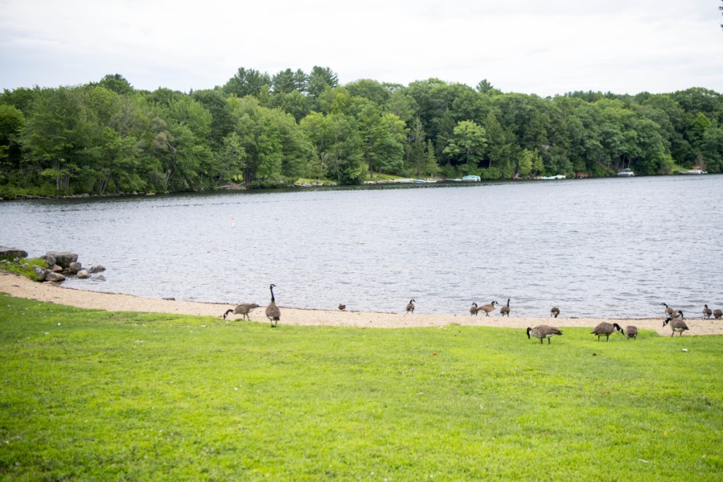 Oakland's Waterfront Park on Messalonskee Lake is open again, although the only visitors there late Saturday afternoon were the geese that have frequented the spot for years.