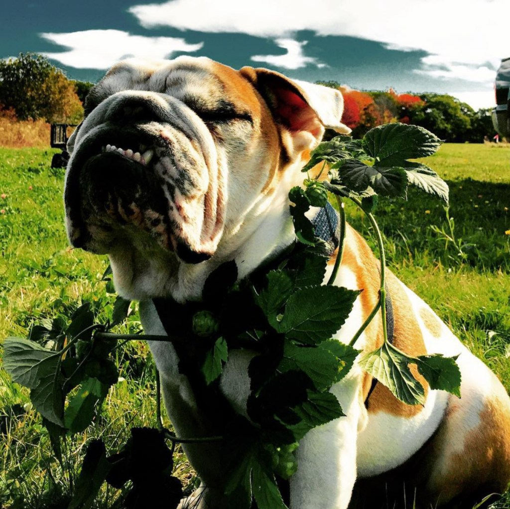 The name of the new Lucky Dog venture in Kennebunk-Kennebunkport was inspired by Matt Dyer's bulldog, Rigby.
