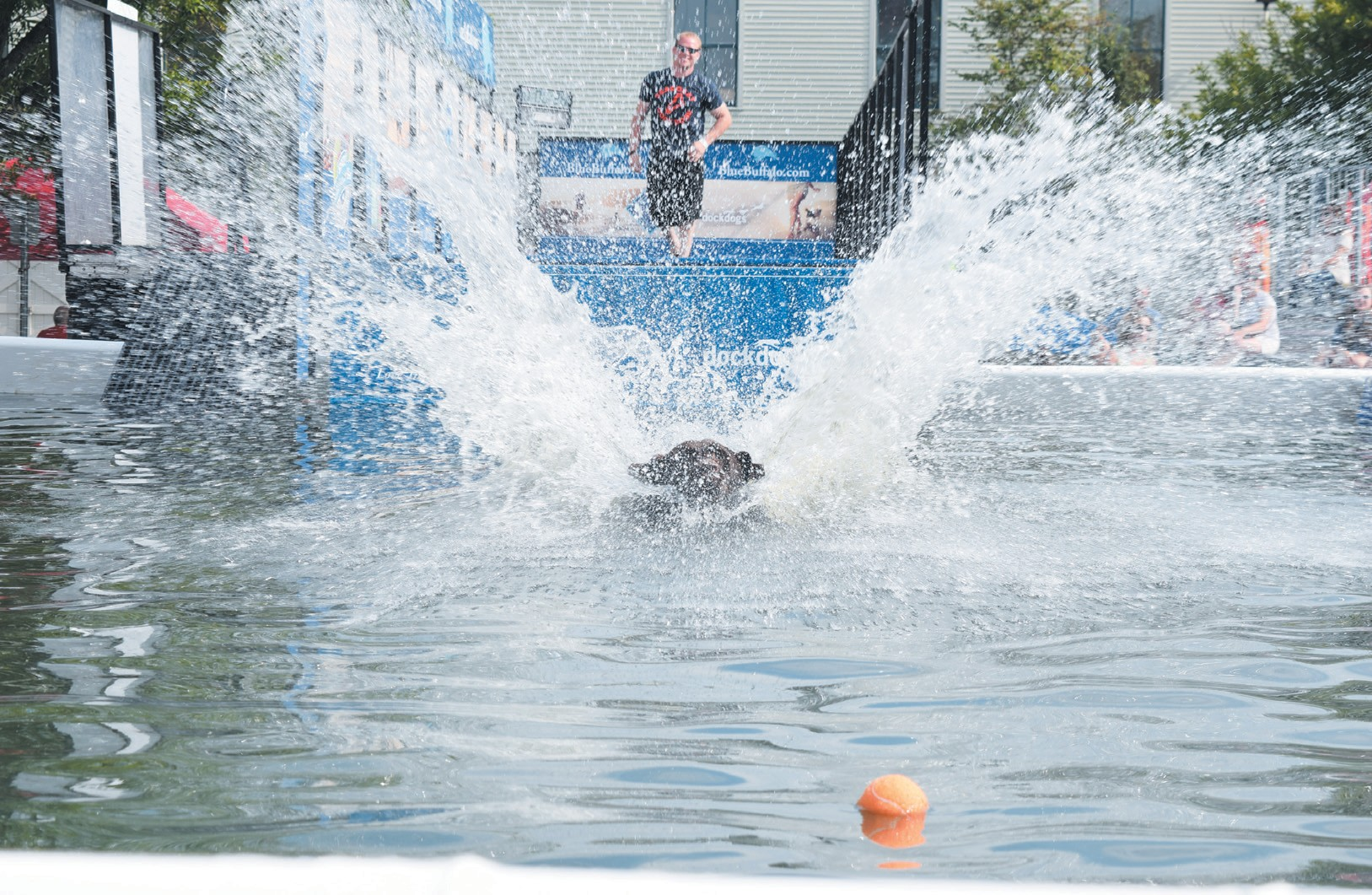 DOZENS OF DOGS took part in Dock Dogs during the Dog Days of August at L.L. Bean in Freeport on Saturday. The free event was well attended, with crowds gathering to see how far the dogs could jump — or whether they'd even get in the water at all. NATHAN STROUT /THE TIMES RECORD