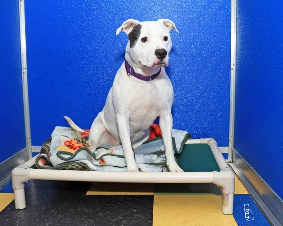 Ginger was brought into the Pet Care of Oxford Hills shelter as a stray in 2014. Because she guards her toys and food, the shelter must be careful about who adopts her.