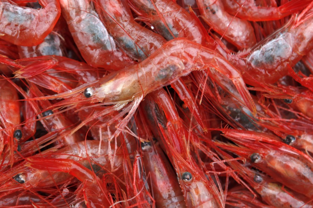 The last time the fishery for northern shrimp was open was 2014 in Maine, New Hampshire and Massachusetts.