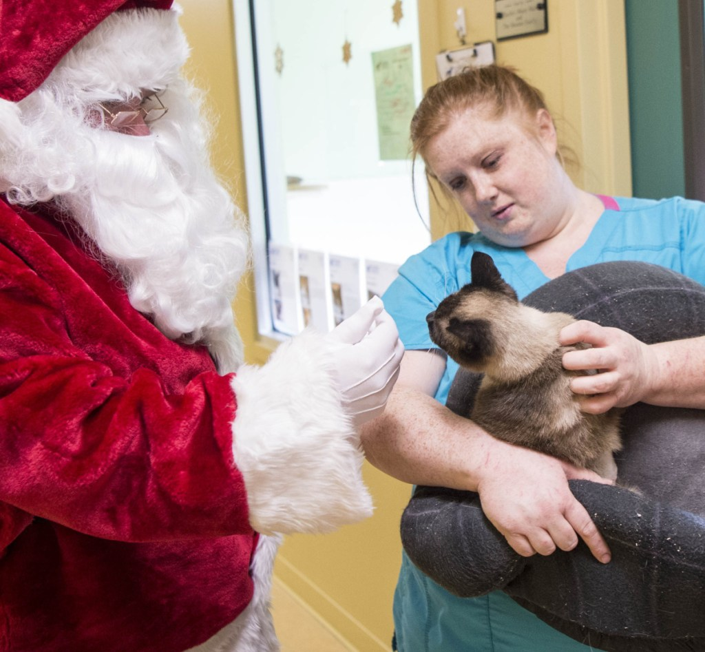 Santa Claus and shelter worker Melonie Dawers tend to one of the cats that was rescued from a storage unit in Unity.