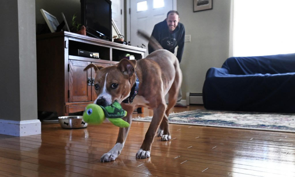 """Flora shows off her toy while playing with Brendan McKay on Friday. She was adopted three months ago and is """"very at home at this point."""""""