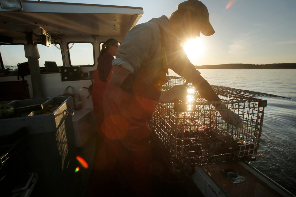 "Cory McDonald removes a bait bag from a lobster trap while fishing off the coast of Stonington. Gov. Janet Mills is pushing back on a federal mandate to reduce the number of vertical lines used by Maine lobstermen as part of an effort to protect endangered right whales. She said Maine's lobster industry isn't the primary problem in recent whale deaths, and that the federal mandate to reduce lines by 50 percent is an ""absurd federal overreach."""