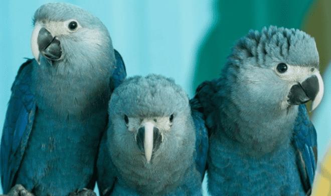 Image result for guacamayo azul