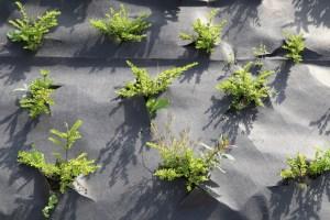 zastosowanie folii rolniczych i agrowłókniny