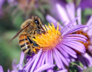 You're Multipassionate! Be like the bee, sampling many flowers, and moving on when you've got the nectar you need.