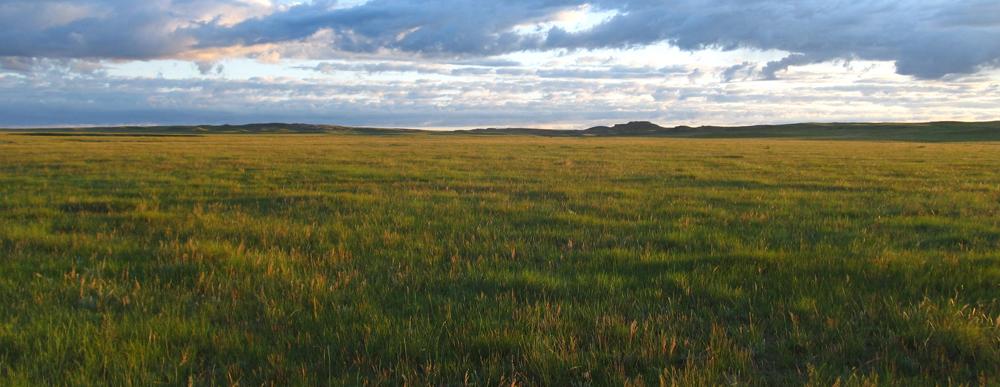 general-prairie-photo-Kristen-Rumbolt-Miller