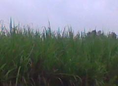 Nature005
