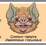 """Multiversity Keeps It Real: """"Science Comics: Bats"""""""