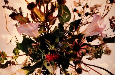"""""""Untitled"""" Flowers by Veronica Siek"""