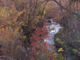 Colorful Delicate Fall