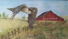 Western Falcon