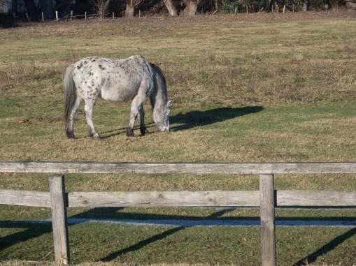 Pferd heute Nachmittag in Dellbrück