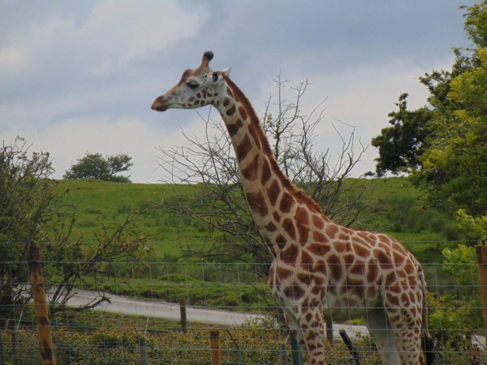 Port Lympne - Wild Animal park (3/5)