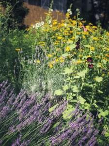 Lavendel im Garten, Lavendelöl, Lavendel Lippenbalsam