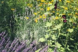 Naturkosmetik selbst machen: Lavendelöl und Lavendel Lippenbalsam