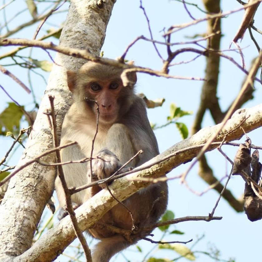 monkey on a tree watching