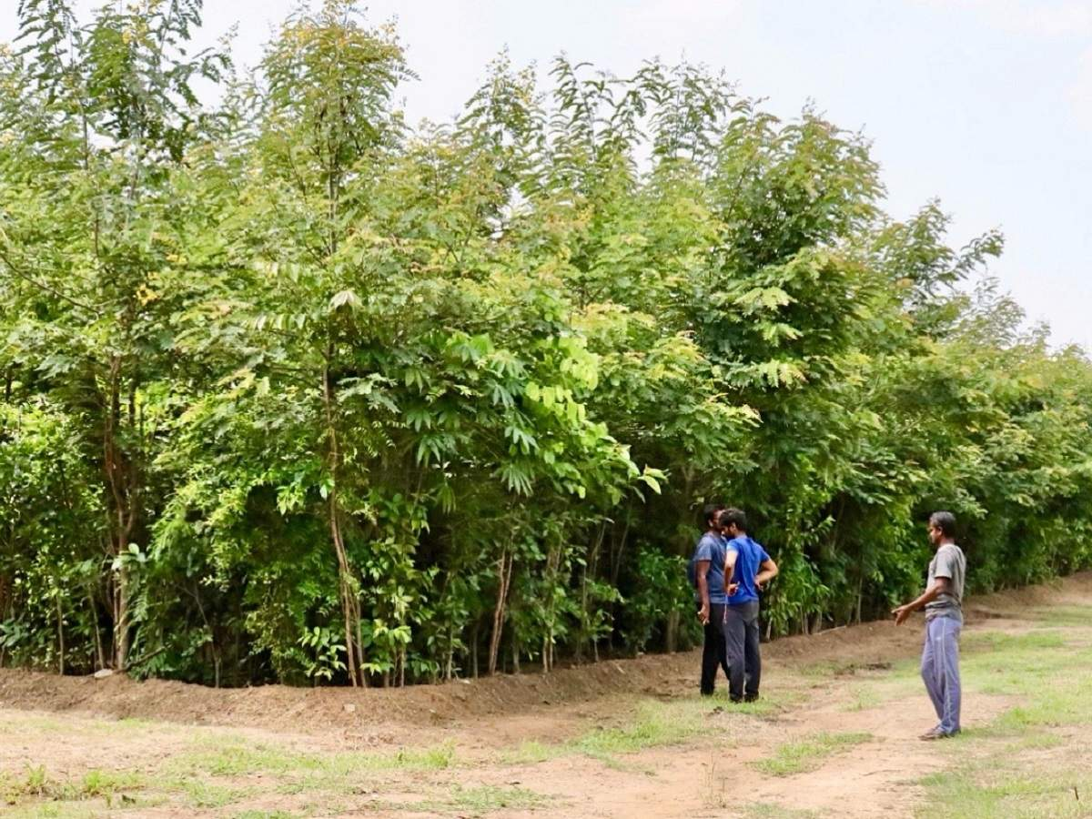 More commonly used in urban areas, the aim of the miyawaki method is to grow a forest dense enough that it cannot be walked through. Mumbai A Miyawaki Forest In The Middle Of The City To Offset Deforestation