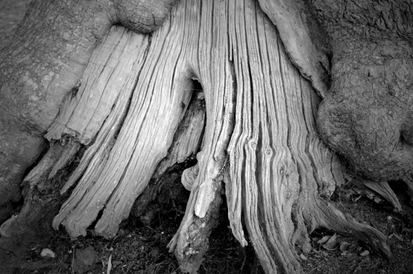 black & white tree trunk https://muminanutshell.com