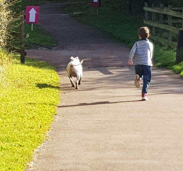 boy-running-with-dog