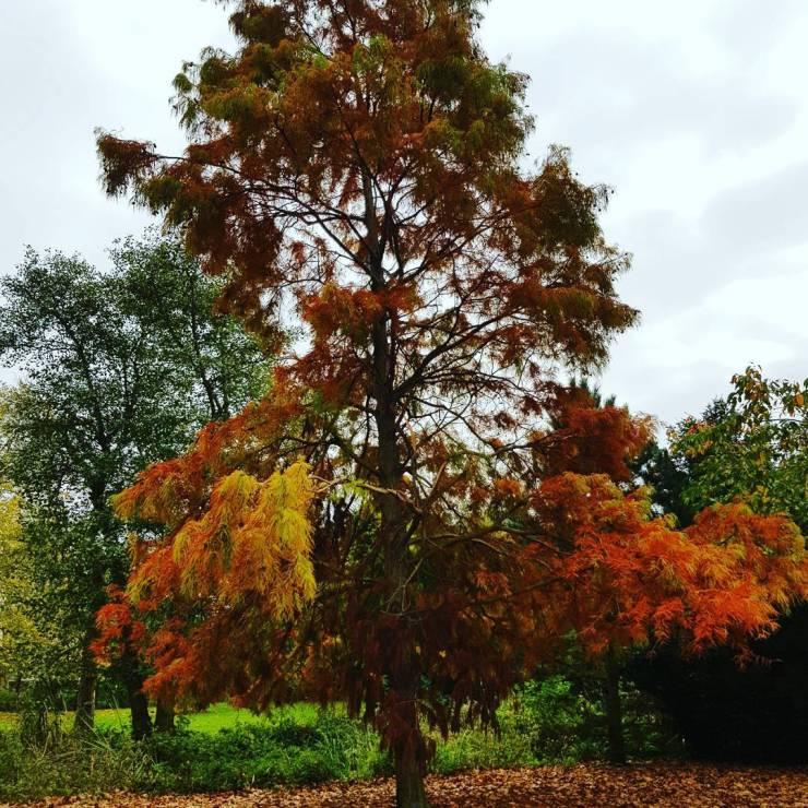autumn-tree-red-orange-yellow