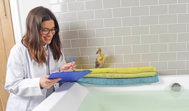 Bathrooms.com have announced a national search for an official duck tester to sample a Bathrooms.com bath and be an official duck tester ambassador. The six ducks to test the bath will go against each other for a chance to be granted the official position.  APPROVED SELECTION   We have looked through the images and shortlisted the ones we want to share with the press.  Press photos:  31 32 41 44 67 91 39 112 130