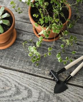 15 Indoor gardening tips for beginners