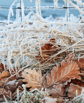 5 top tips to get the garden ready, Winter is coming
