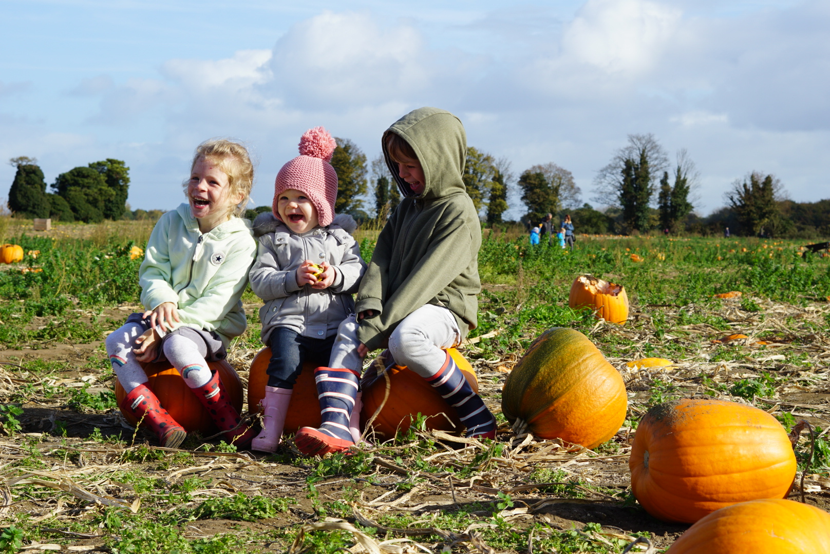 Pick your own pumpkins and a maize maze #Outdoorfun