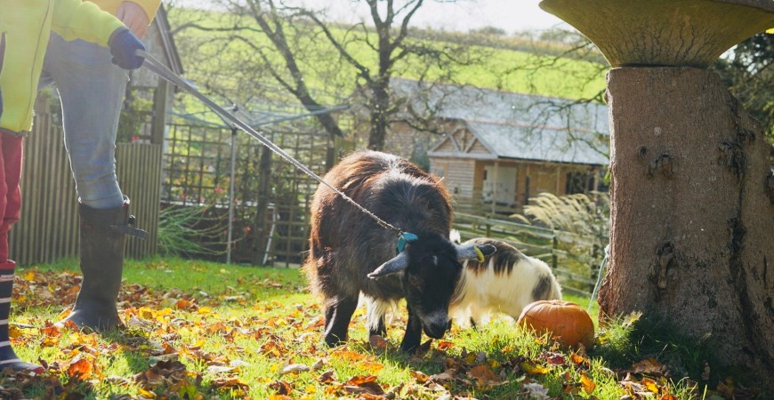 A family holiday on a farm to remember #travel