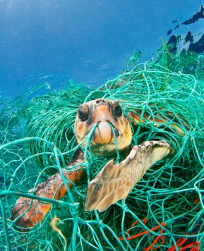World Oceans Day – keep our Oceans clean from plastic #PlasticFreeSummer