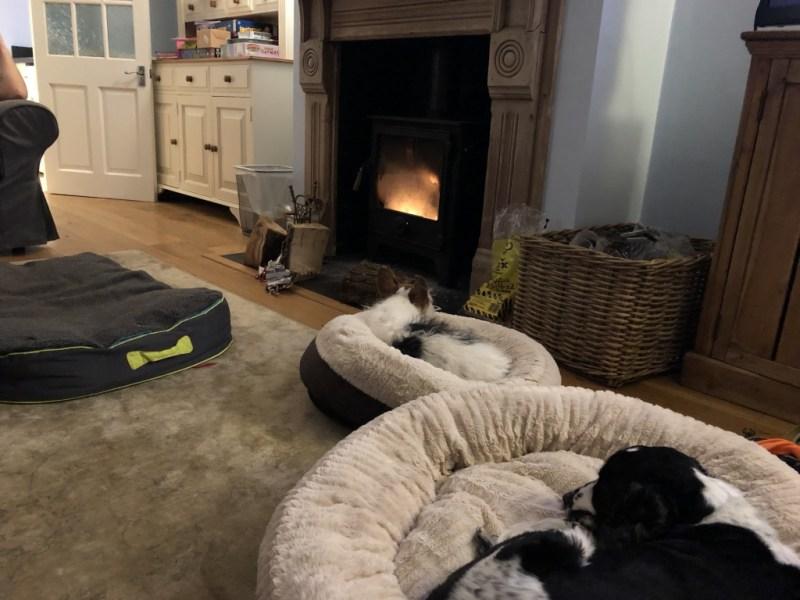 Dogs in The Ellen Bed
