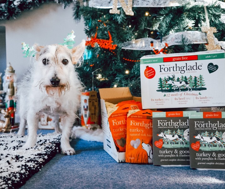 Day 9 #12DaysOfConstantChristmas Win an amazing festive prize for your pooch