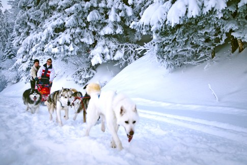whitepod_winter_dogsledding