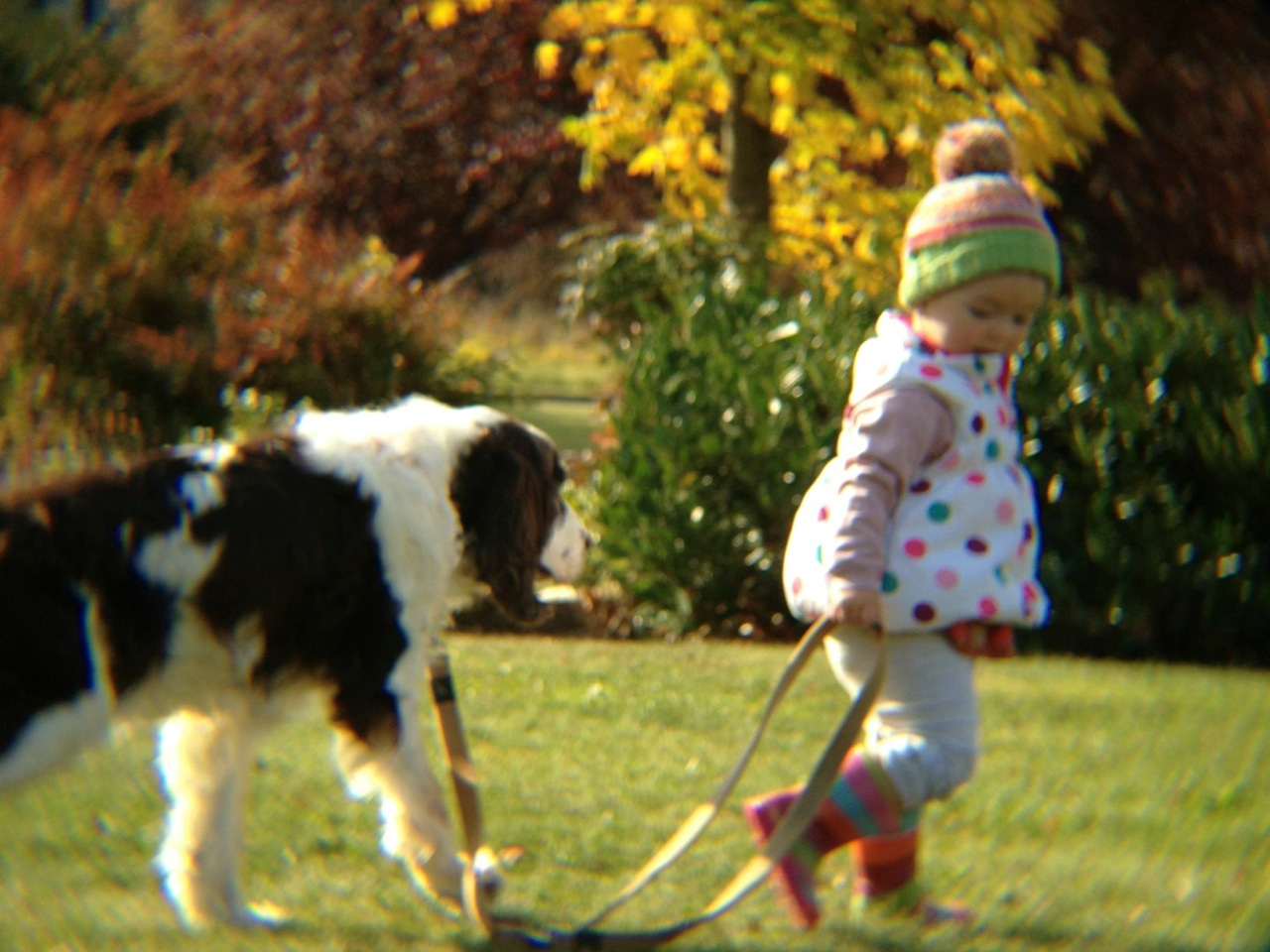 How to tell your children about your pet dogs death and decide when to do it