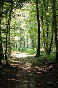 Domaine De Litteau's forest